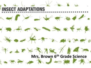 Mrs. Brown 6 th  Grade Science