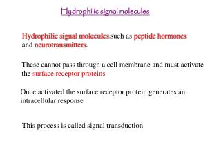 Hydrophilic signal molecules