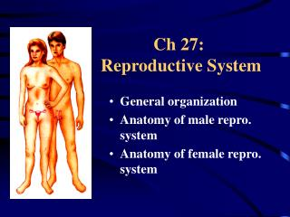 Ch 27:  Reproductive System