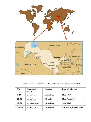 Garlic accessions collected in Central Asia in May-September 2000
