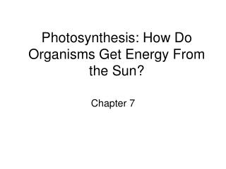 Photosynthesis: How Do Organisms Get Energy From the Sun?