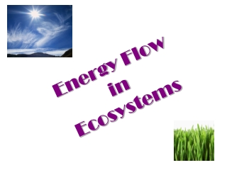 Energy Transformations  in Ecosystems