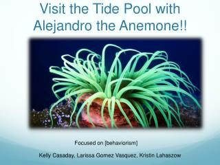 Visit the Tide Pool with Alejandro the Anemone!!