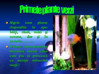 Primele plante  verzi