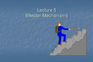 Lecture 5 Effector Mechanisms