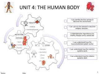 UNIT 4: THE HUMAN BODY