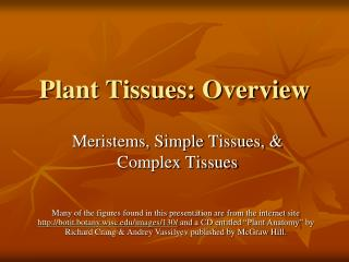 Plant Tissues: Overview