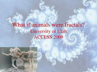 What if animals were fractals?
