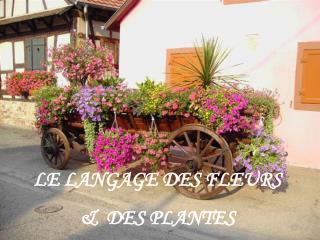 LE LANGAGE DES FLEURS  &  DES PLANTES