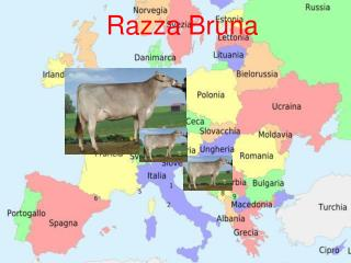 Razza Bruna