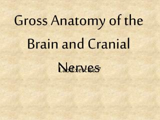 Gross Anatomy of the Brain and Cranial Nerves