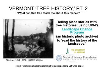 VERMONT  TREE HISTORY,  PT. 2   What can this tree teach me about this place