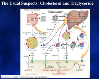 The Usual Suspects: Cholesterol and Triglyceride