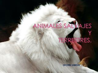 ANIMALES SALVAJES  Y  TERRESTRES.