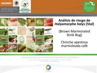 Análisis de riesgo de Halyomorpha halys ( Stal ) (Brown  Marmorated  Stink Bug)