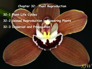 Chapter 32:  Plant Reproduction