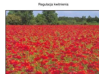 Regulacja kwitnienia