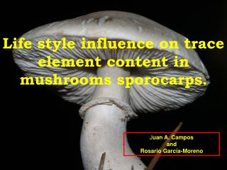 Life style influence on trace element content in mushrooms  sporocarps .