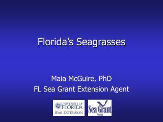 Florida s Seagrasses