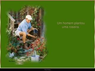Um homem plantou                                  uma roseira.