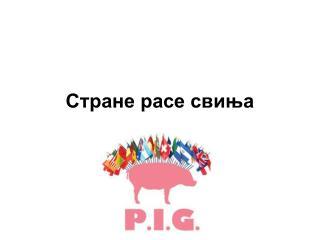 Стране расе свиња