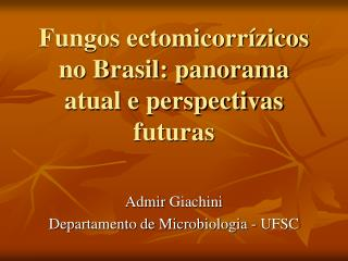 Fungos ectomicorrízicos no Brasil: panorama atual e perspectivas futuras