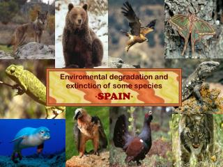 Enviromental degradation and extinction of some species ·SPAIN·