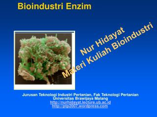 Bioindustri Enzim