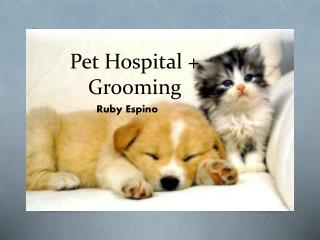 Pet Hospital + Grooming