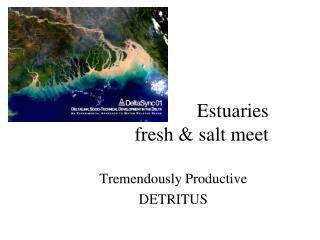 Estuaries fresh & salt meet