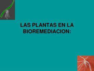 LAS PLANTAS EN LA BIOREMEDIACION: