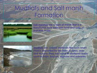 Mudflats and Salt marsh Formation