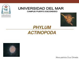 Phylum Actinopoda