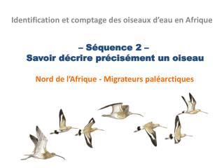 Identification et comptage des oiseaux d�eau en Afrique
