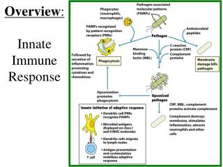 Overview : Innate Immune  Response