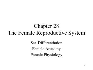 Chapter 28 The Female Reproductive System