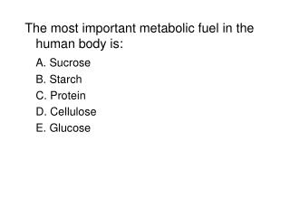 The most important metabolic fuel in the human body is: A. Sucrose 	B. Starch 	C. Protein