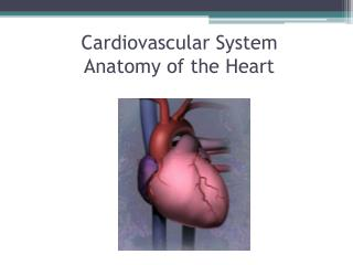 Cardiovascular System Anatomy of the Heart
