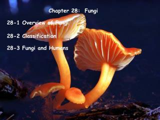 Chapter 28:  Fungi
