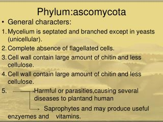 Phylum:ascomycota