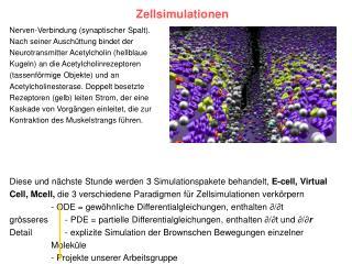 Zellsimulationen