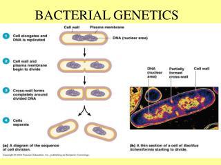 BACTERIAL GENETICS