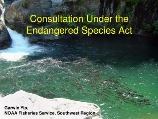 Consultation Under the Endangered Species Act