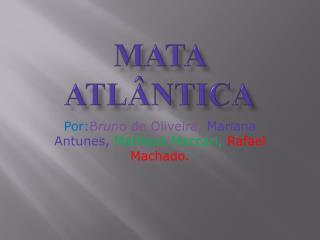 Mata Atl�ntica