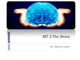 MT 2:The Brain