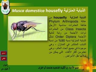 الذبابة المنزلية  housefly Musca domestica