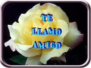 LLAMO