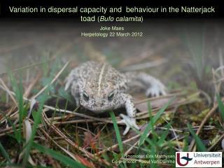 Variation in dispersal capacity and  behaviour in the Natterjack toad  ( Bufo calamita )
