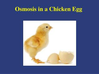 Osmosis in a Chicken Egg