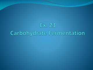 Ex. 23  Carbohydrate Fermentation
